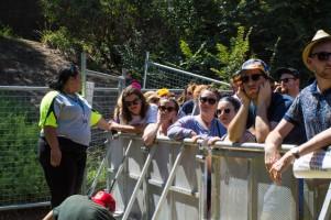 St Jerome's Laneway Festival Crowd